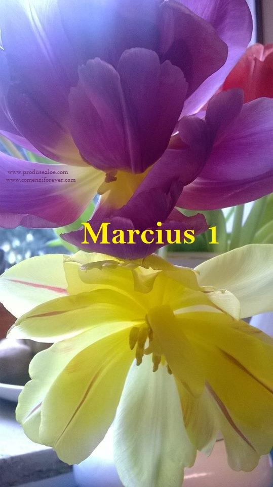 tavasz koszonto viragok gyonyoru szep aloe vera forever living marcius 1