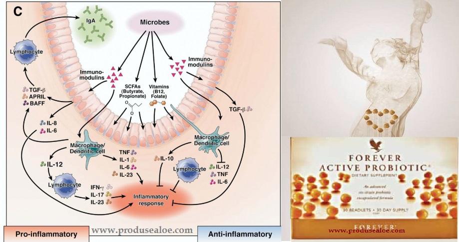 prebiotice si probiotice ce sunt pre si  pro bioticele forever probiotic