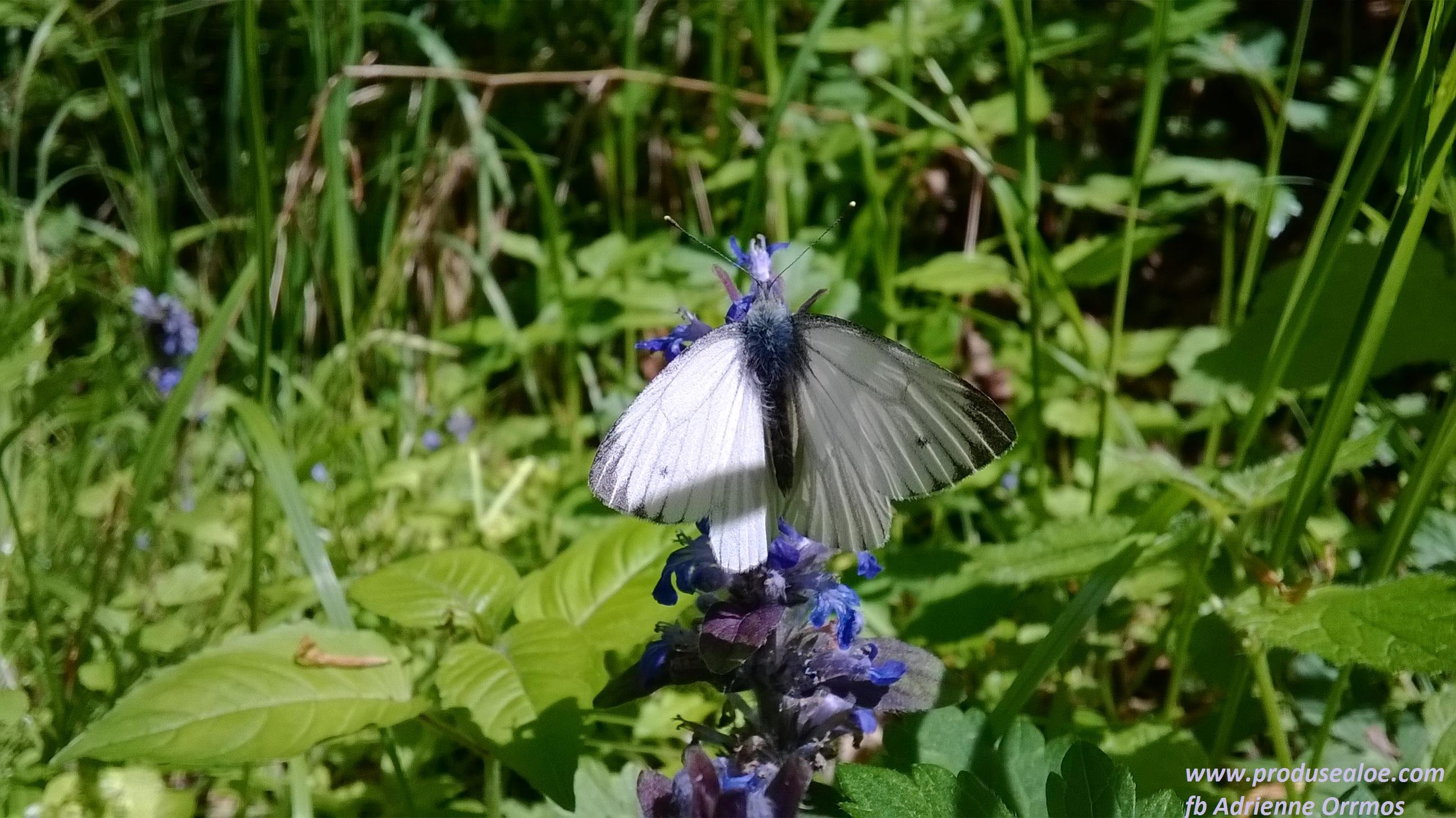 van egy titkos helyem ahova mindig visszajarok locul meu secret unde mereu ma intorc, butterfly, pillango, fluture