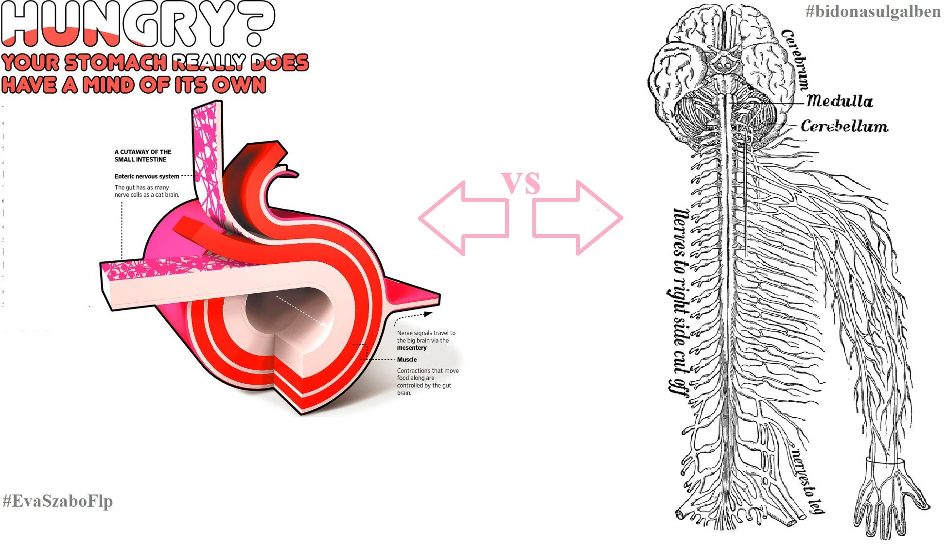 adesea-ori-luam-decizii-cu-stomacul-oare-de-ce-sistemul-enteric-intestinal